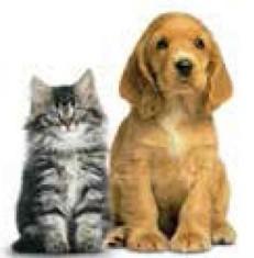 dog-cat-goldfish - Edited